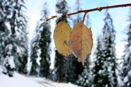 冬の美白対策